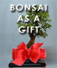 Bonsai Gifts